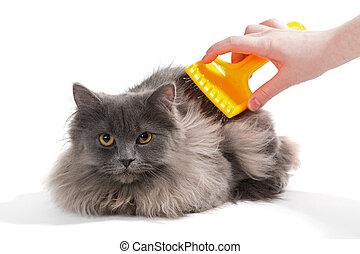 pelucheux, peigne, chat