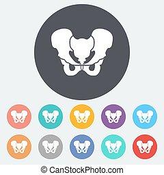 Pelvis - Anotomy Pelvis. Single flat icon on the circle....