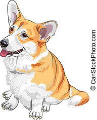pembroke, bosquejo, galés, perro, vector, corgi, sonriente