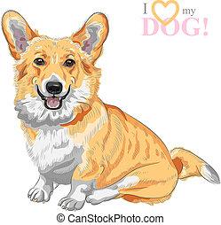 pembroke, skizze, walisisch, hund, vektor, corgi, lächeln