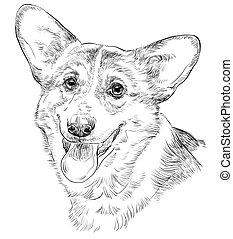 Pembroke Welsh Corgi, vector hand drawing portrait