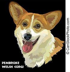 Pembroke Welsh Corgi, vector portrait