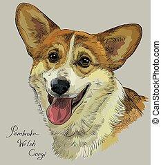 Pembroke Welsh Corgi,colorful vector hand drawing portrait