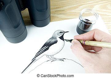 pen and ink illustrator drawing a bird using binoculars