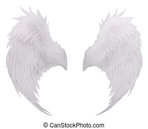 pena, fundo, isolado, pássaros, f, asa, uso, plumage, branca