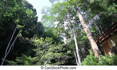 Penang National Park In Asia Malaysia