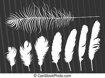 penas, ilustração, vetorial, cobrança, fundo, pássaro