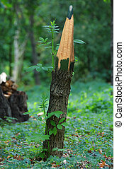 Pencil and trunk of tree with sprouts - New life of tree. ...