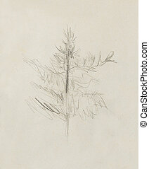 pencil drawing on old paper, spruce sketch.