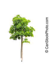 pencil tree isolated on white background. Concept and idea