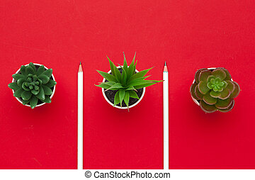 pencils and two succulent plant on red background top view