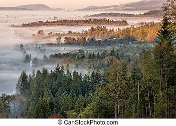 pendant, brouillard, vue, forêt, matin