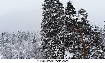 pendant, grand, snow., aérien, mélangé, 4k, voler, branches...