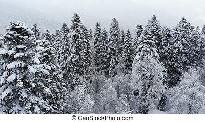 pendant, grand, snow., aérien, mélangé, 4k, voler, branches, chute neige, bas, forêt, hiver, neigeux, passé, vue, stupéfiant, sur, pins
