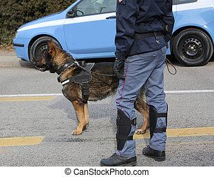 pendant, italien, événement, chien, police
