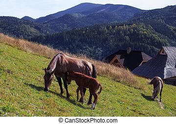 pendiente, familia de caballo