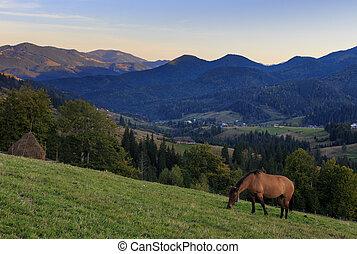 pendiente, montaña, caballo, tarde, plano de fondo