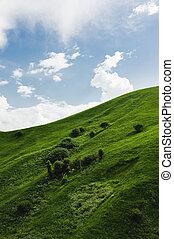 pendio, blu, sonoma, raro, cielo, erba, lussureggiante, contro, clouds., gentile, alberi verdi, valle, collina