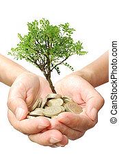 pengar träd, tillväxt