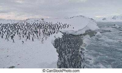 Penguin colony after swimming. Antarctica flight.