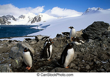 Penguin colony in front of beautiful glaciers in Antarctica landscape