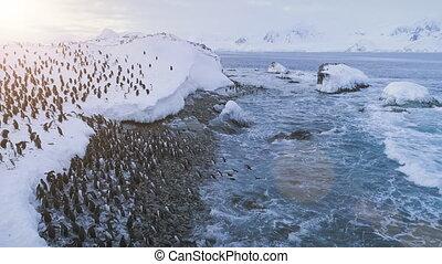Penguin colony on Antarctica shore. Aerial flight. -...