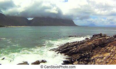 Penguin colony on the rocks