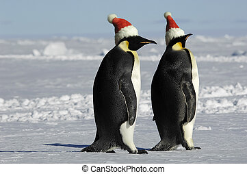 Penguin couple on Christmas - Antarctic penguin couple on...