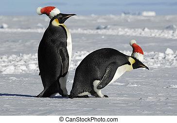Penguin couple on Christmas