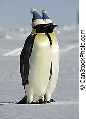 Penguin couple with caps