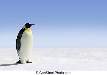 Antarctica - Penguin in Antarctica on a sunny day