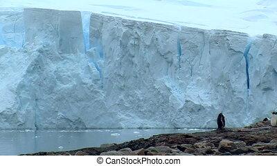 penguin in antarctica with huge glacier