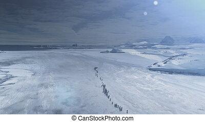 penguin, migratie, op, sunset., antarctisch, luchtschot