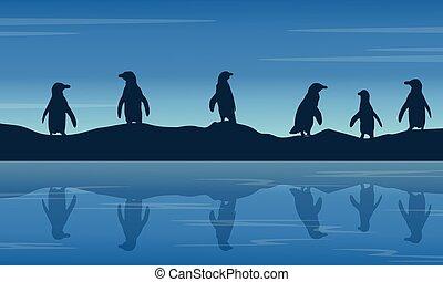 penguin on hill at night landscape