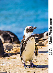 Penguin on the beach