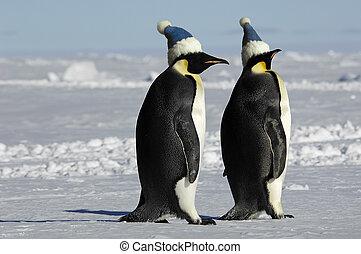 Penguin pair with caps