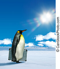 Penguin planning to travel - Antarctic penguin planning to...