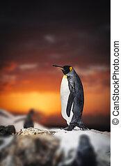 penguin standing on the rocks
