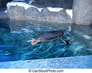 Penguin swimming - Penguin swmming in habitat
