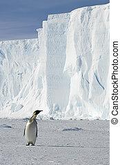 Penguin with iceberg in Antarctica
