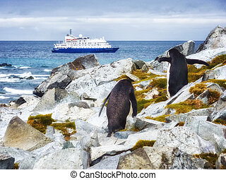 Penguins and Cruise in antarctica islands