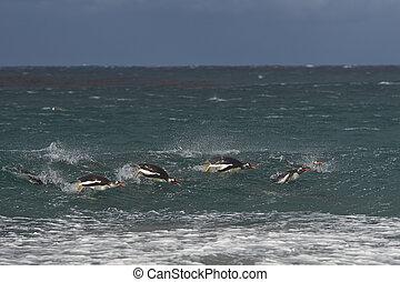 Penguins at sea
