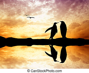 penguins at sunset - penguins silhouette at sunset