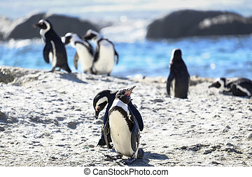 Penguins at the beach