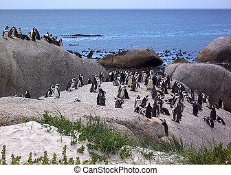 penguins on rocks by sea