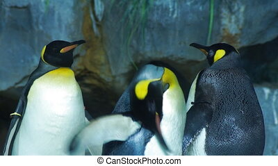 Penguins - close-up