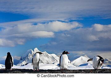 penguins dreaming