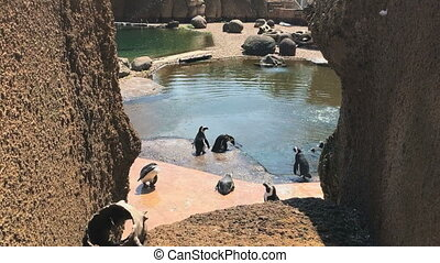 Penguins enjoy summer sun in the Zoo.