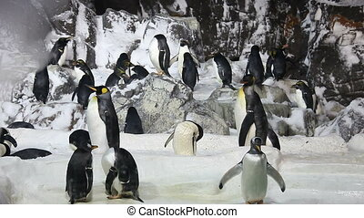 Penguins in a Manmade Environment