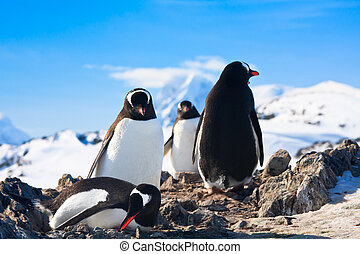 penguins on the stony coast of Antarctica